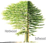 Softwood trees